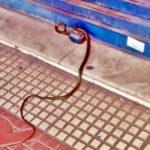 Cobra silvestre é encontrada em Volta Redonda