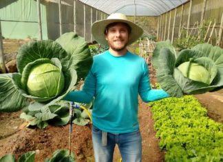 Engenheiro ambiental lança curso online sobre hortaliças.