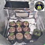 Plantas de maconha são apreendidas em apartamento