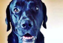 Cão desaparecido em Barra Mansa é procurado