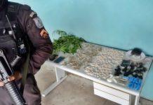 PM fecha o cerco, apreende droga e descobre pés de maconha em Volta Redonda