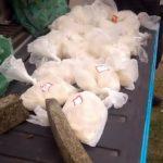 PM encontrou droga em terreno à venda, em Três Rios