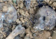 Ossada foi encontrada em cova rasa de um terreno