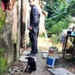 Jovem é preso por maus-tratos a cão, em Paraty