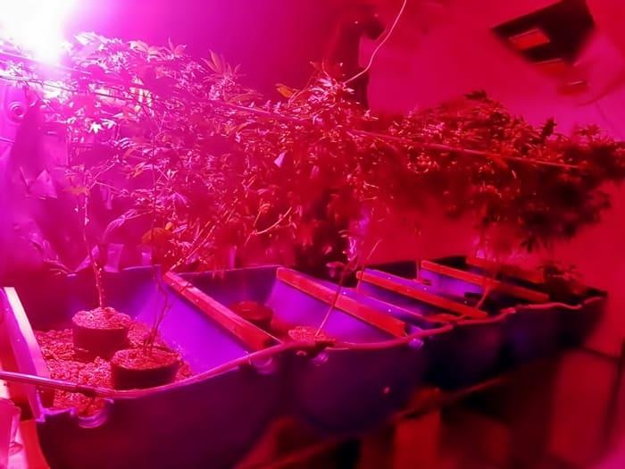 Estufas armazenavam e mantinham as plantas saudáveis para a colheita.