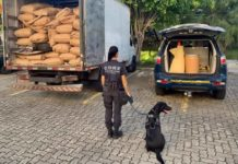 PRF prende motorista com 57 quilos de drogas em caminhão na Dutra