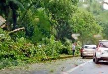 Chuva derruba árvores e deixa parte de Paraty sem luz