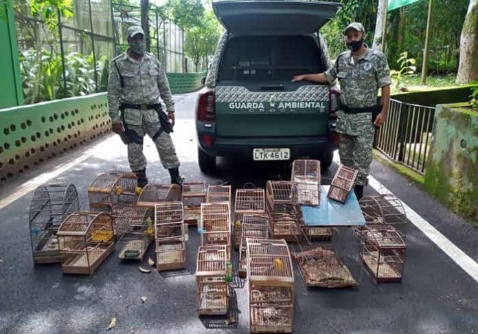 Guardas municipais apreendem 19 pássaros silvestres em rancho de Volta Redonda