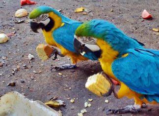 Animais do zoológico de Volta Redonda ganham festa junina com dieta saudável